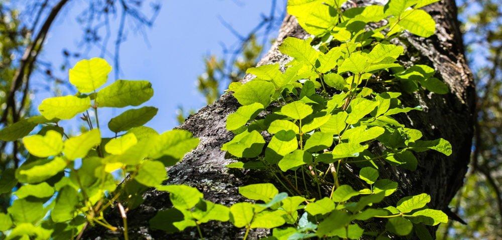spring summer rash types